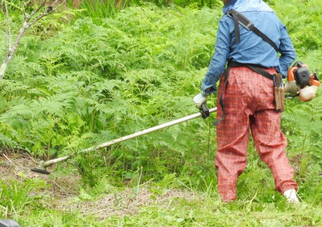 徳島市で草刈りにかかる料金相場は?追加料金や業者選びのコツまで解説