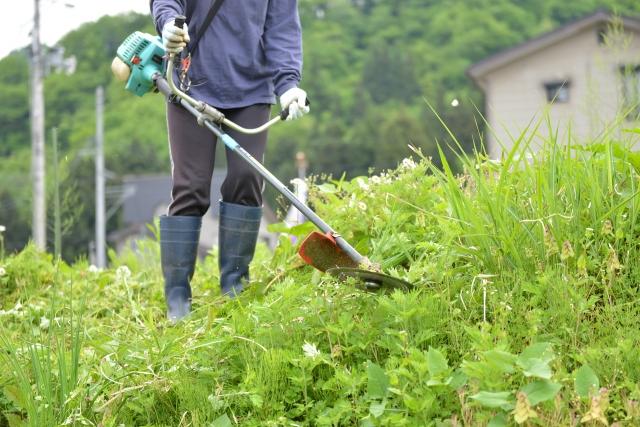 徳島市で草刈りに最適な年3回の時期~楽に草刈りを終えるコツまで徹底解説